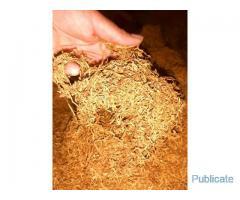 tutun de cea mai buna calitate - Imagine 3
